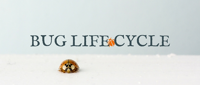 Bug Life Cycle