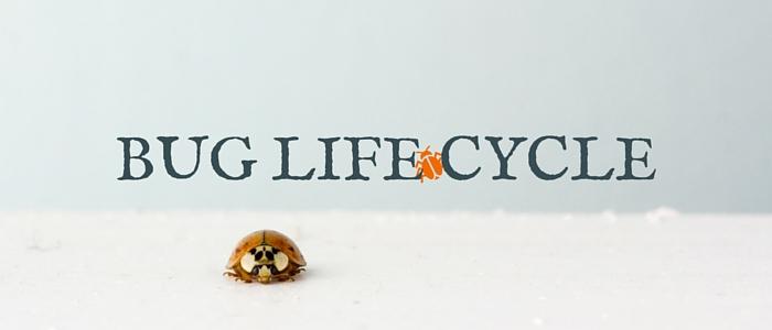 bug life cycle image
